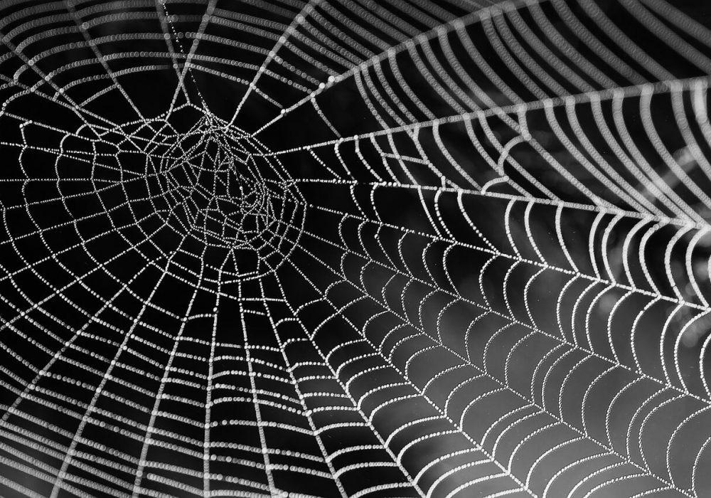 קורי עכביש בתמונת שחור לבן