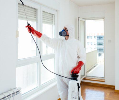 תמונה של איש מקצוע שמבצע הדברה בתוך בית